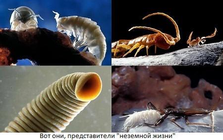 Неземная жизнь на Земле