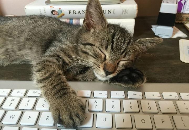 Психологи рассказали о влиянии кошек наработу хозяев наудаленке