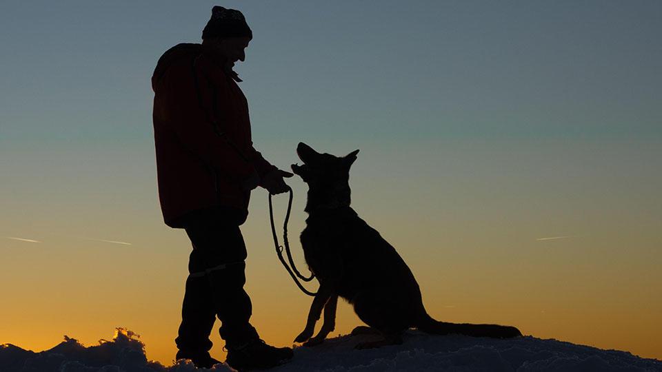 Собаки впервые были одомашнены в Сибири 23 тысячи лет назад