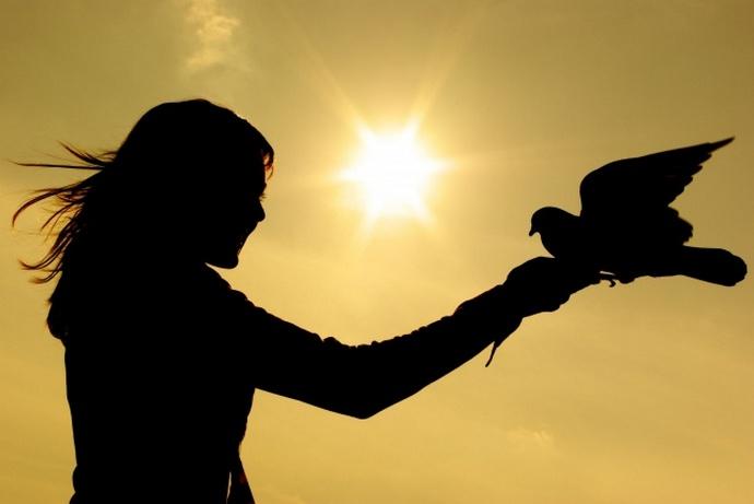 Я свободна как птица картинка