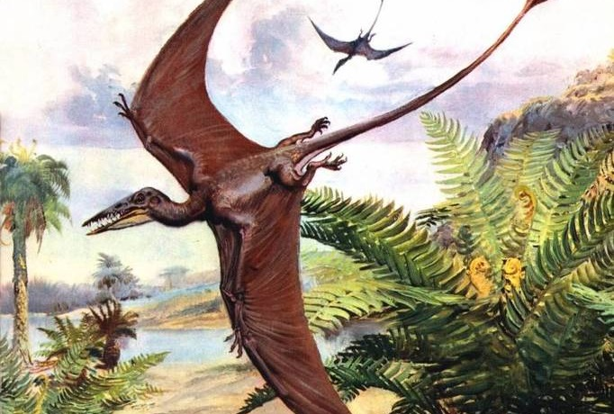 Вымершие летающие ящеры живут в Новой Гвинее?
