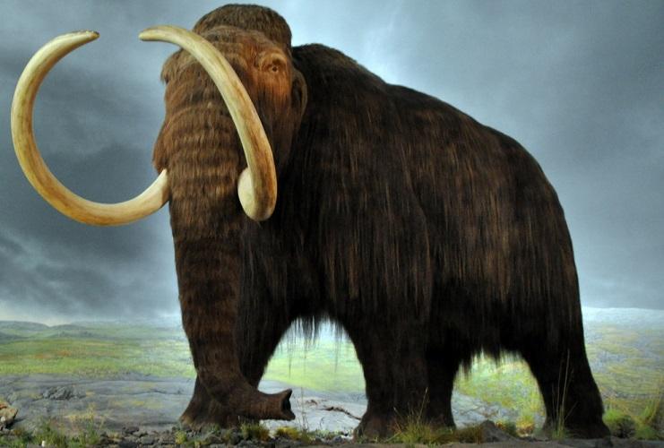 Ученым удалось получить ДНК мамонта, который жил на Земле более миллиона лет назад