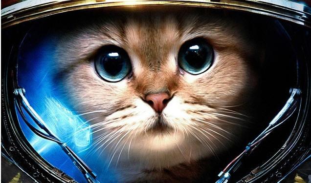 Кошка-космонавт Фелисетта