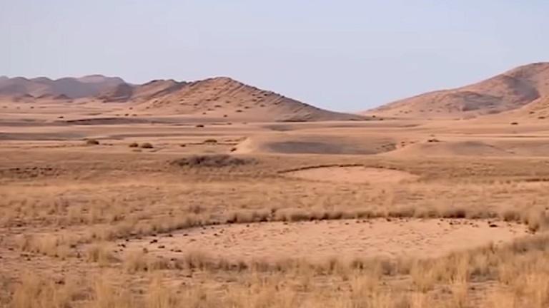 Откуда берутся странные «ведьмины круги» в пустынях и лесах