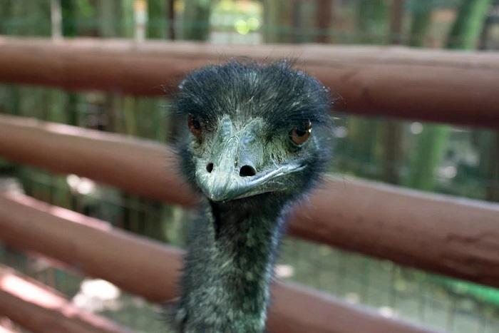 Страус проглотил дорогую серьгу изуха посетительницы зоопарка