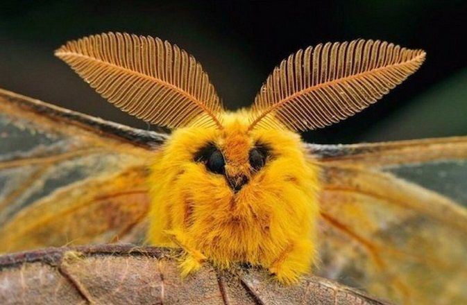 Эволюция насекомых оказалась сложнее, чем считалось ранее