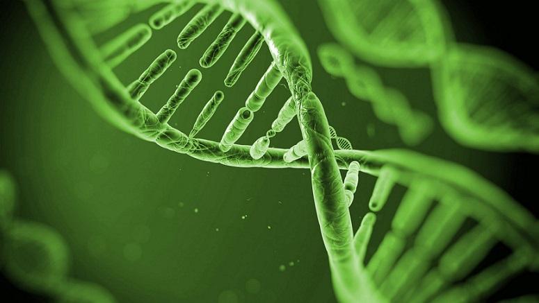 Травы способны изменять свою ДНК генами других растений