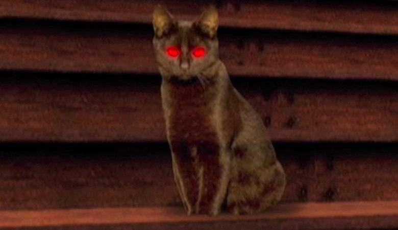 В Сингапуре пара сняла на видео призрачную кошку в своей квартире