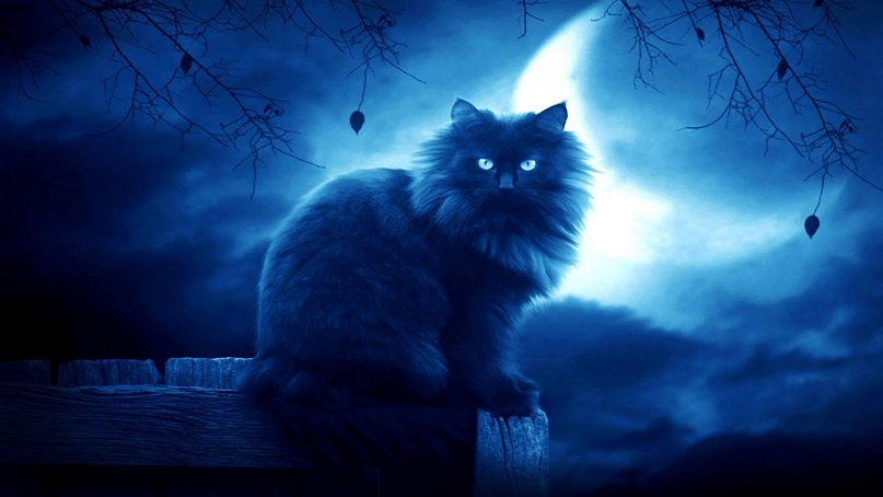 Женщина уверена, что запечатлела на видео «кота-призрака» (ВИДЕО)