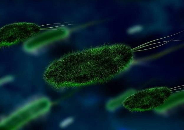 Ученые обнаружили древнейшие в мире микробы