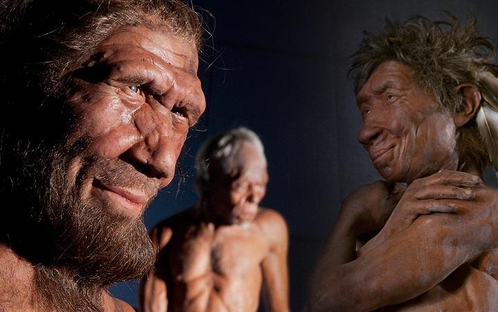 Ученые сравнили группы крови неандертальцев и денисовцев