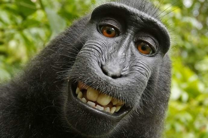 Смешная картинка фото на аву, под открытки