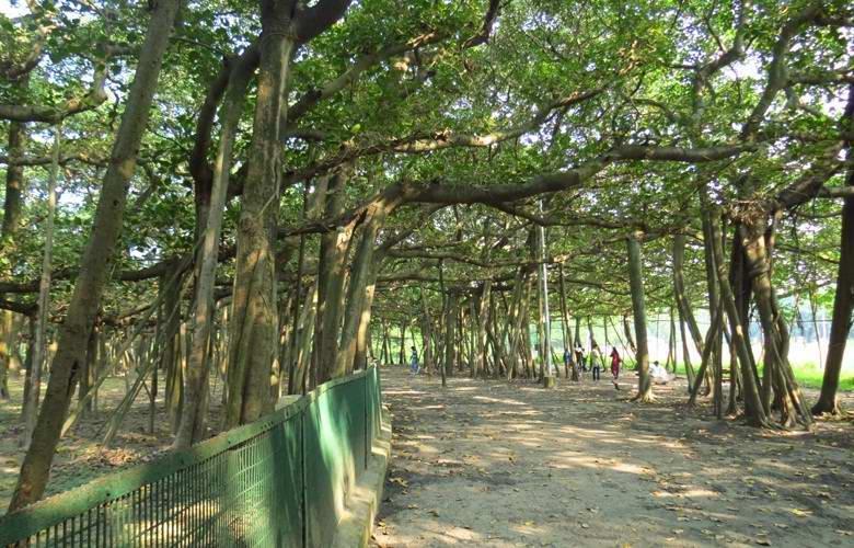 Удивительный индийский лес, состоящий из одного-единственного дерева