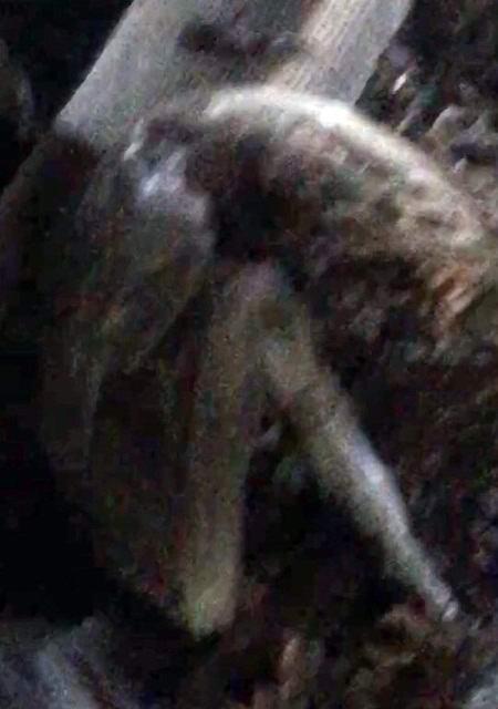 Курянин обнаружил «останки чужого» в заброшенном здании