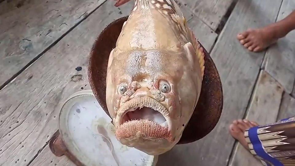 Рыбак испугался пойманной «печальной» рыбы, слишком похожей на него