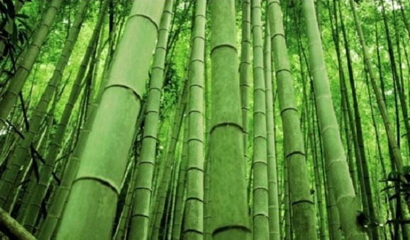 Долина черного бамбука
