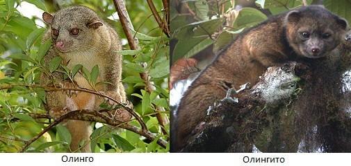 Животные, которых ученые открыли в последние годы