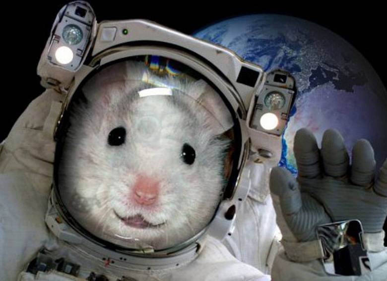 нет, если фото животных летавших в космос зимушкой тебя