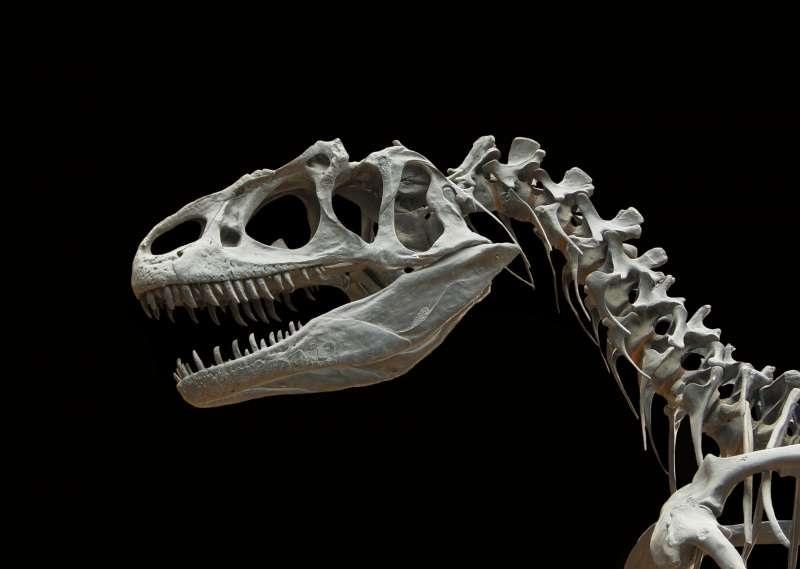Каждые 27 миллионов лет на Земле происходят массовые вымирания животных