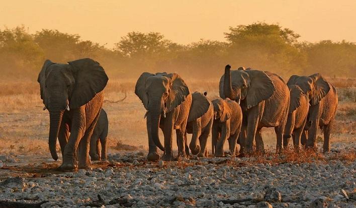 Создан искусственный интеллект для подсчета слонов