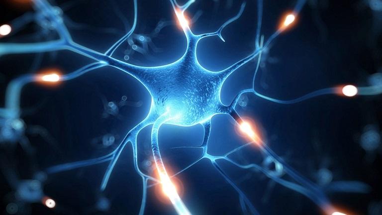Ученые: нервные клетки восстанавливаются