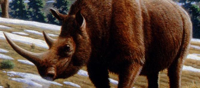 В Сибири нашли останки шерстистого носорога, жившего во времена Ледникового периода