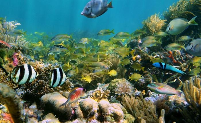 Картинки по запросу фотографии Сады Королевы: подводный рай для туристов