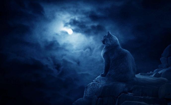 Кошки-призраки