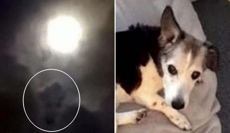 На фото полной луны женщина увидела мордашку своей любимой собаки
