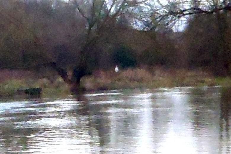 Британец сфотографировал загадочный белый призрак на берегу реки