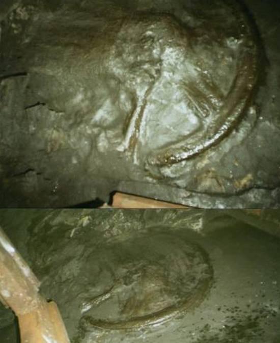 Отпечаток колеса возрастом 300 миллионов лет не заинтересовал ученых