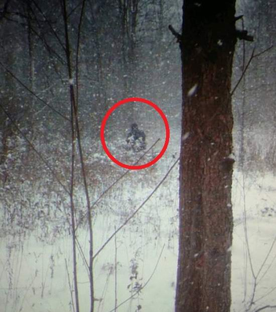 Бигфут в заснеженном лесу попал на фотоловушку