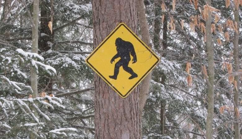 Канадцы столкнулись с гуманоидом в ночном лесу