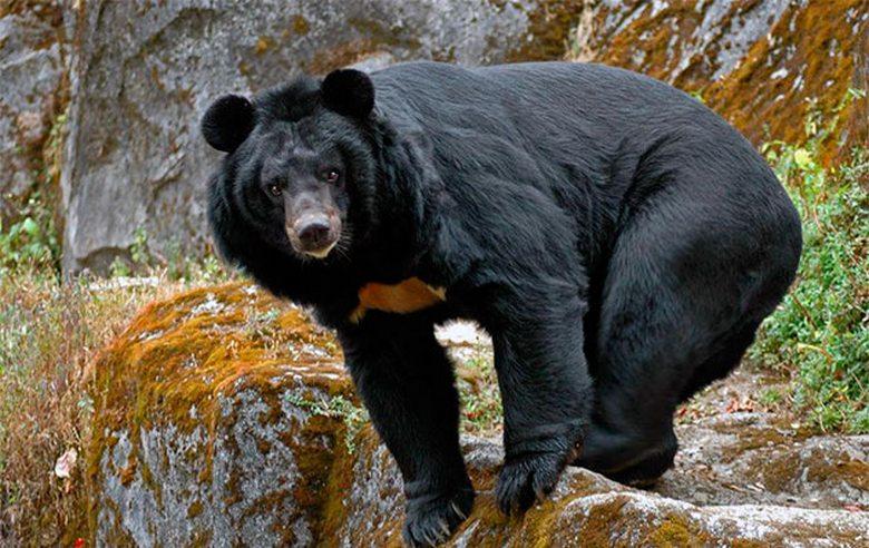 От холода и голода потерявшегося ребенка спас черный медведь