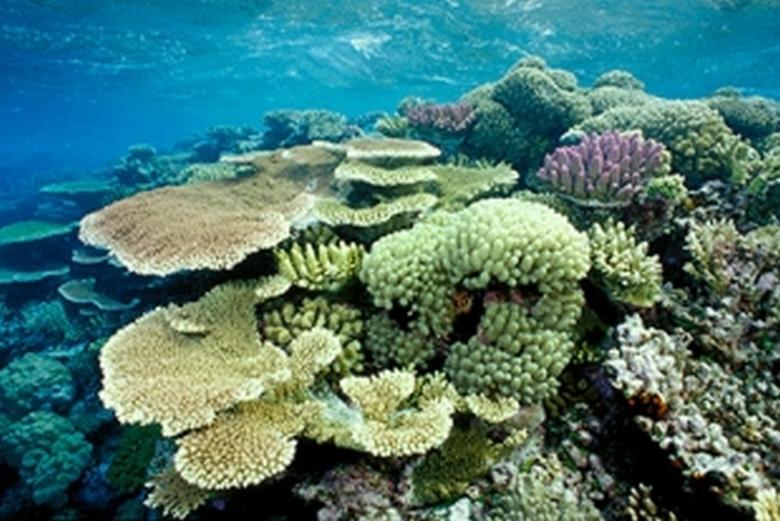 Ученые учатся заселять мертвые коралловые рифы