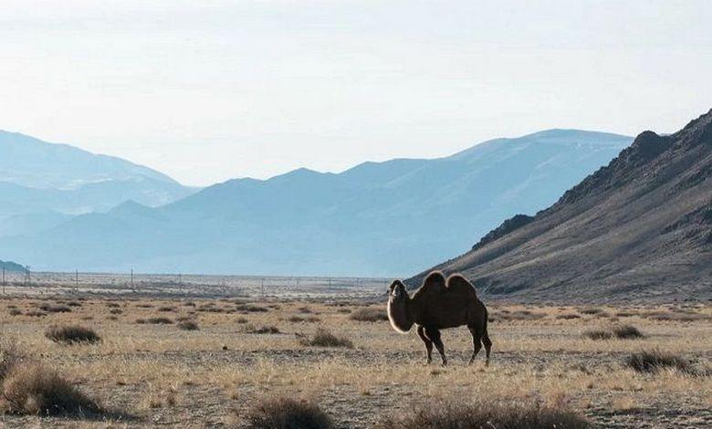 Советские солдаты видели в Монголии динозавров?