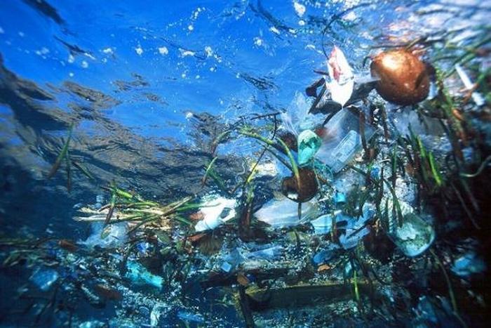 Информация для любителей мусорить, употребляя при этом морепродукты (6 фото)