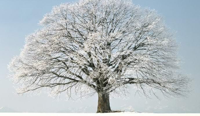 Якутия мистическая: Священные деревья