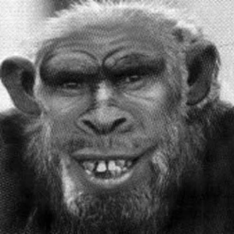 Американцы еще век назад скрестили человека и шимпанзе