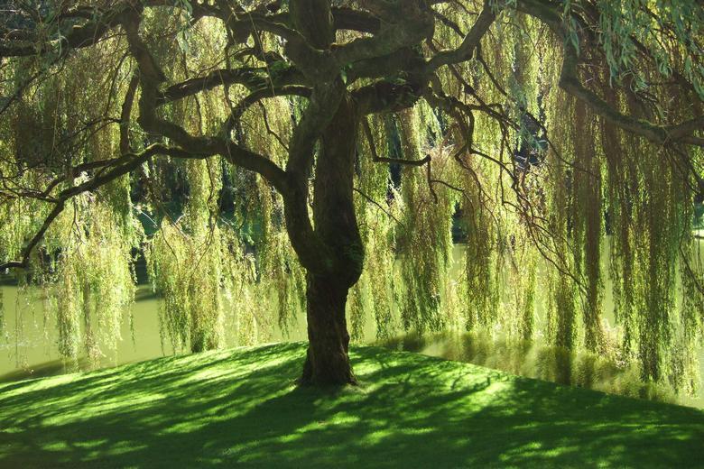 """Самые необычные деревья в мире"""" />"""