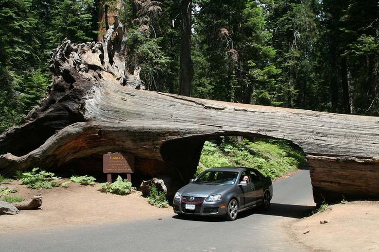 Самые необычные деревья в мире