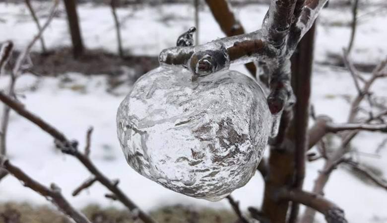 На деревьях в Мичигане «выросли» удивительные ледяные «яблоки»