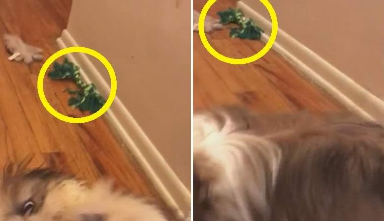 Паранормальщину разглядели на безобидном видео с собакой