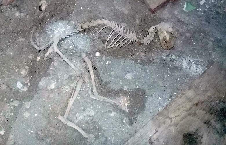 Останки загадочного животного обнаружили в Узбекистане