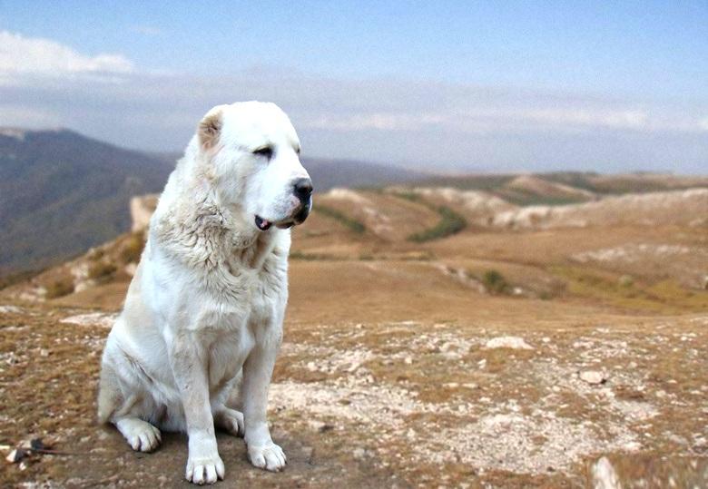 Немного о собаках и отношении к ним на Руси