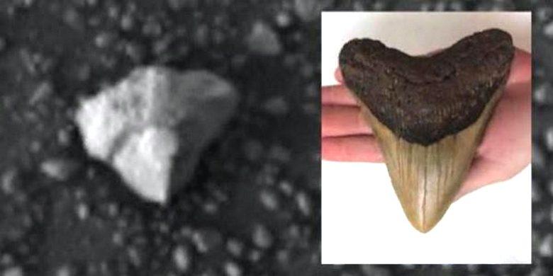 Скотт Уоринг нашел на фотоснимке с Марса «зуб существа» исполинского размера
