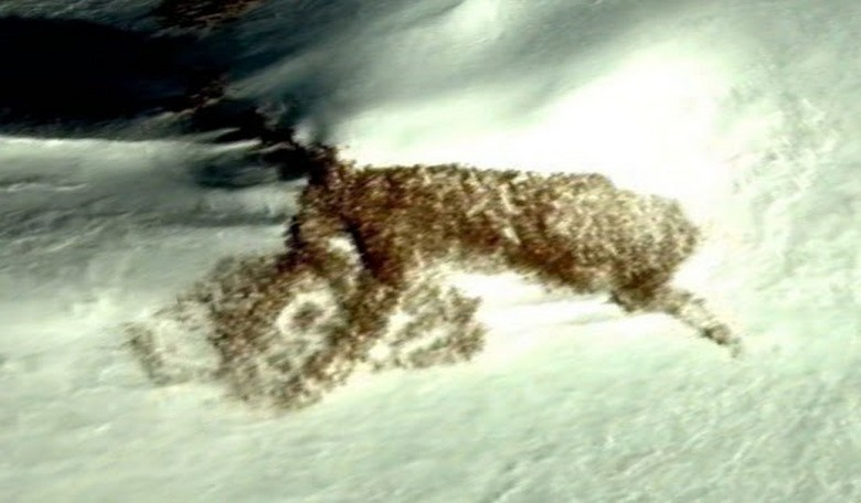 В Антарктиде виртуальные археологи нашли «геоглиф» в виде волка