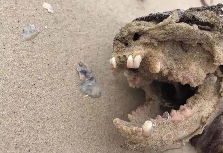 Странное существо выбросило на пляж Чарльстона