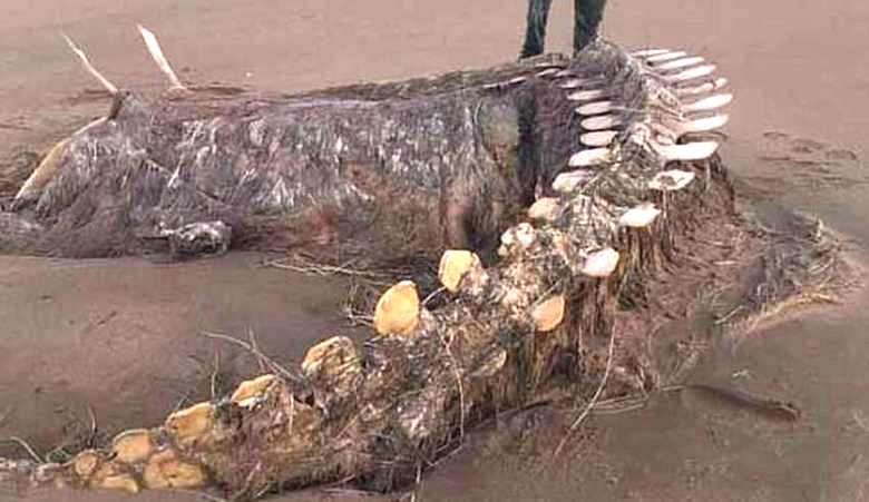 Скелет таинственного зверя обнаружили после шторма на шотландском пляже