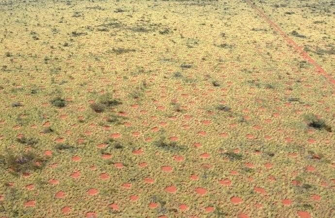 В Австралии нашли загадочные «дьявольские круги» (3 фото)